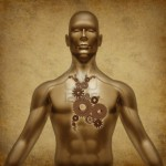 Человек и его тела
